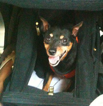 Louie copilot