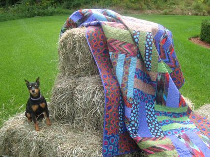 Louie photo shoot quilt scene