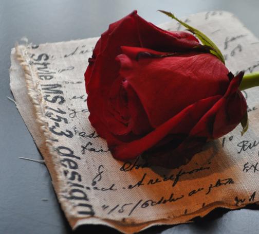 rose on fabric2